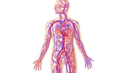circulatie sanguina